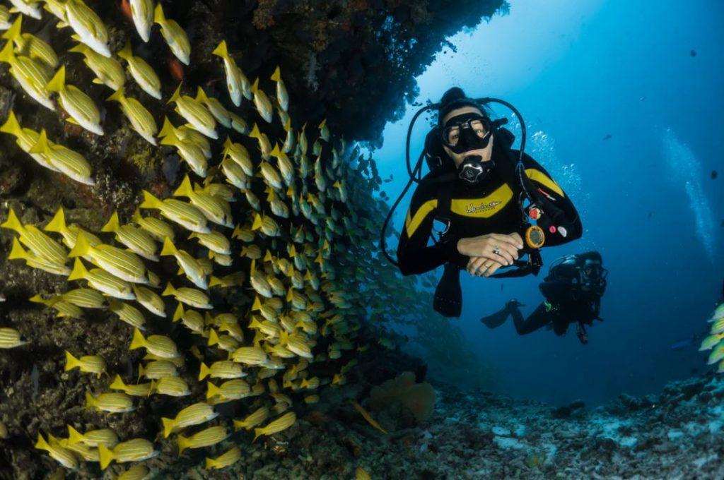 niveaux plongée sous marine